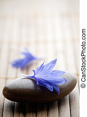 Cornflower - Blue cornflower petals on table