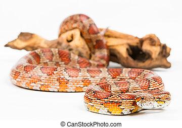 serpent,