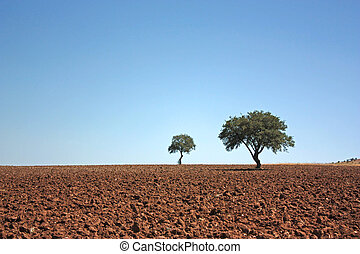 Two trees on fallow land