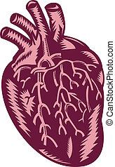 human heart done in woodcut style. - illustration of the...