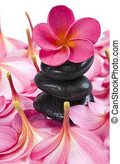 Frangipani Calm - Pink Frangipani Flowers and Black pebbles...