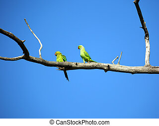 pair of green parrots on branch