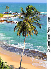 beautiful tropical beach landscape with palm