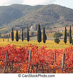amazing tuscan vineyards in autumnal colors , at horizon St....