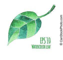 Watercolor leaf. - Vector watercolor illustration of...