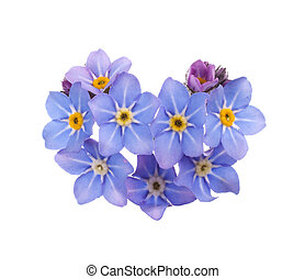 forget-me-nots - beautiful blue flowers forget-me-nots...