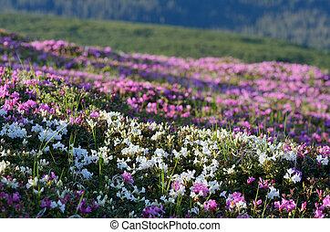 Flowers on the hillside