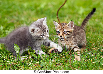 playful kittens on the green grass