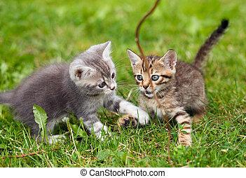 playful kittens on the green grass