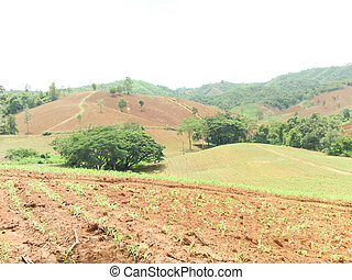 Conventional farming on the mountain
