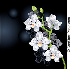 white orchids - artistically painted white orchid on a black...
