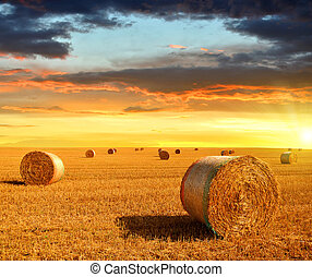 Straw bales on farmland at sunset