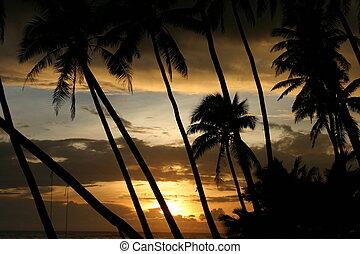 bello, tropicale, tramonto, attraverso, noce di cocco,...