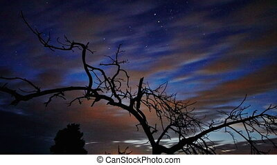 Dead Tree And Night Sky - Timelapse dead tree against night...