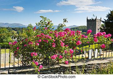 Pink roses Hawkshead Lake District