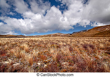 Meager landscape in the Tongariro National Park,...
