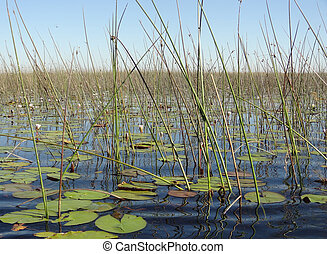 Okavango Delta - waterside scenery at the Okavango Delta in...