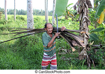 Philippine wood-cutter
