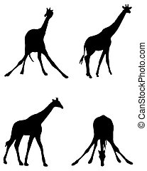 giraffes - Black silhouette of giraffes, vector illustration
