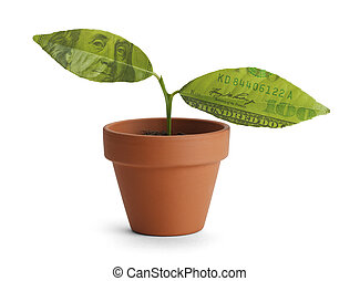 Money Tree - Small tree start with two money leaves in...