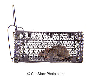 rat trap in front of white background