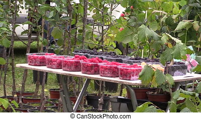 berries plant sold market - Black blackberries, red...