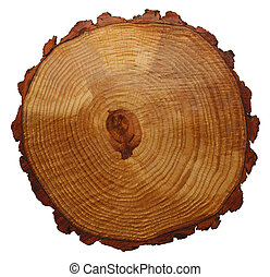 Tree Rings - Wood Grain Tree Cross Section Isolated On White...