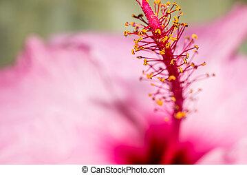 Macro pink Flower with Yellow Details Pollen vivid petals -...