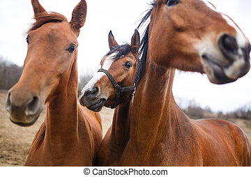 Portrait of horses - Wild horses on the meadow at spring...