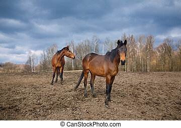 Two wild horses - Wild horses standing on the meadow at...