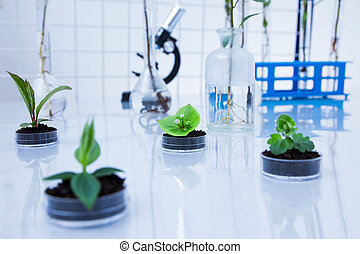 Genetically modified plant tested in petri dish .Ecology...