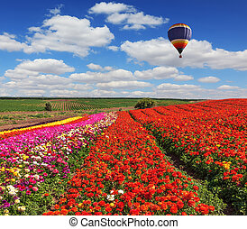 Large  scenic balloons