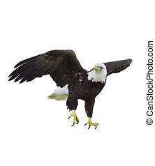 American Bald Eagle - Digital Painting Of American Bald...