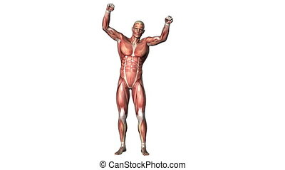 human body - victory posed man