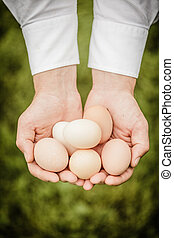 Eggs in Hands of a Farmer over Grass background