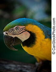 Parrot - Close up head shot of a Parrot central looking at...