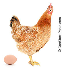 Brown hen with egg - Brown hen with egg isolated on white,...