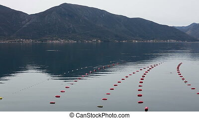 mussel farm in Bay with mountains, raw seafood in Kotor,...