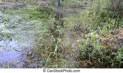 forester swamp - forester carefully wade through the...