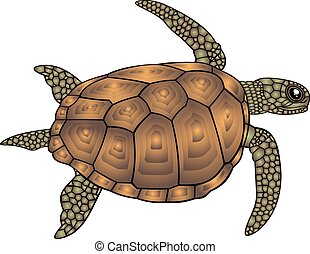 water turtle isolated on the white background
