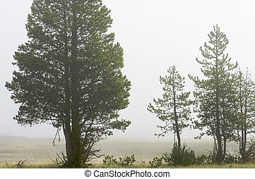 trees in fog Yellowstone National Park