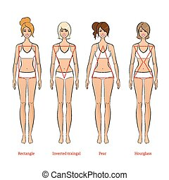 Female body types. - Vector illustration of female body...