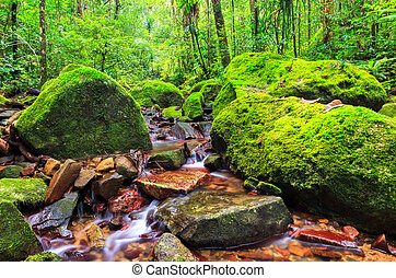 Rainforest stream - Beautiful view of a stream in the...