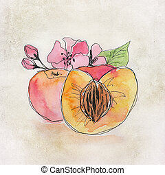 Fruit illustration with watercolor