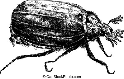 detailed bug pencil drawing style, vector