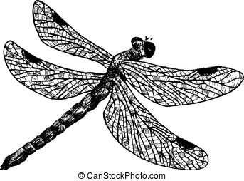 detailed dragonfly pencil drawing style, vector