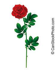 red rose - single red rose