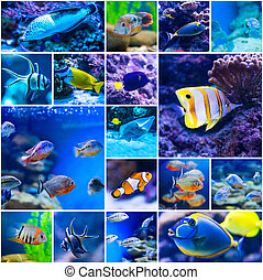 Colorful fish in aquarium saltwater world - Collage of...
