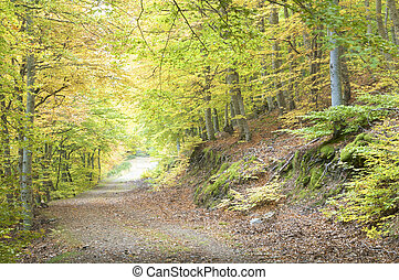 beech forest - Path in beech forest in autumn, Moncayo...