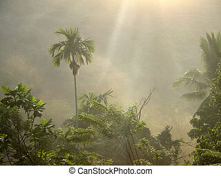 Smoke & Palm trees - A lovely early morning scene with smoke...